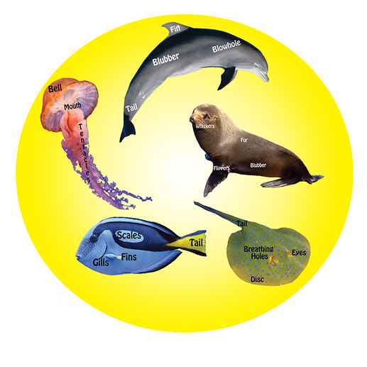 marine life cut outs school incursions marine education